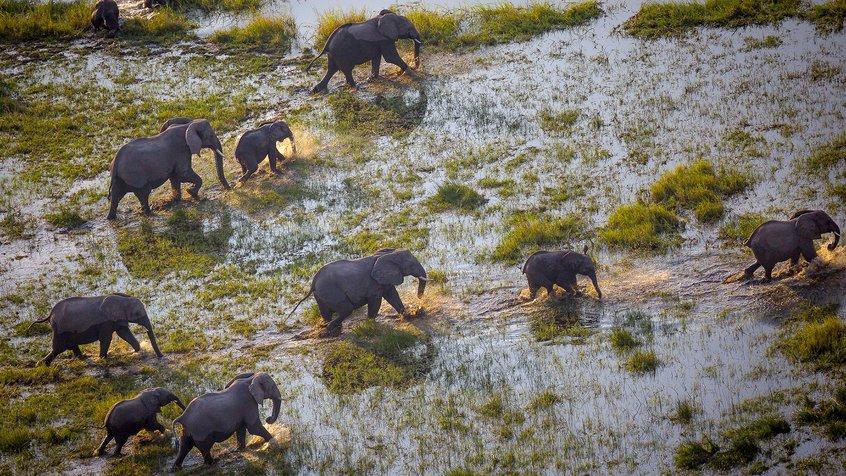 Environmental Film Festival Australia (EFFA) - still 2 - elephants