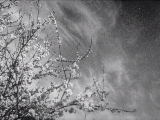 Tree branches in winter - a still from Late Winter to Early Spring