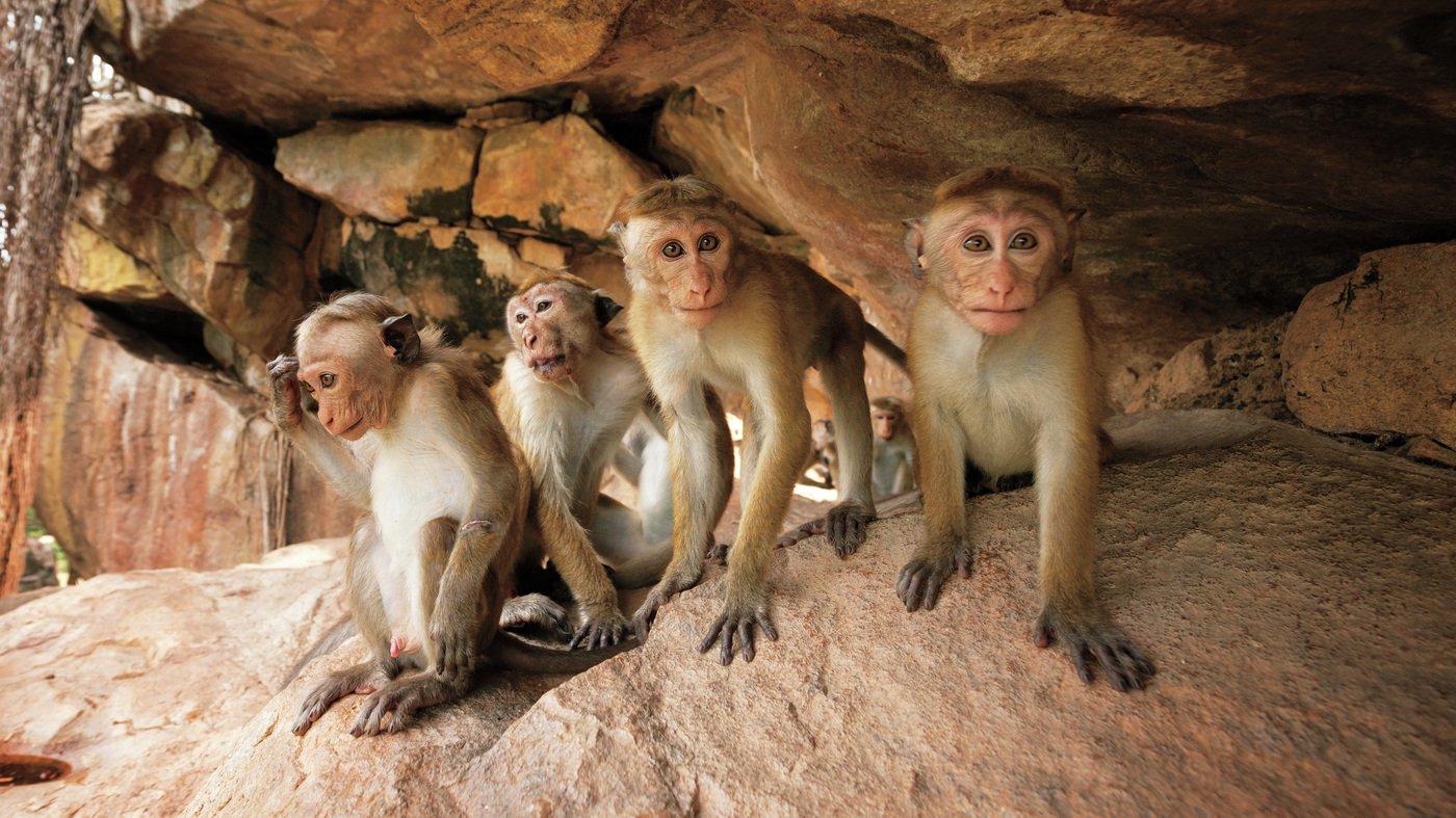 Monkey_Kingdom.jpg