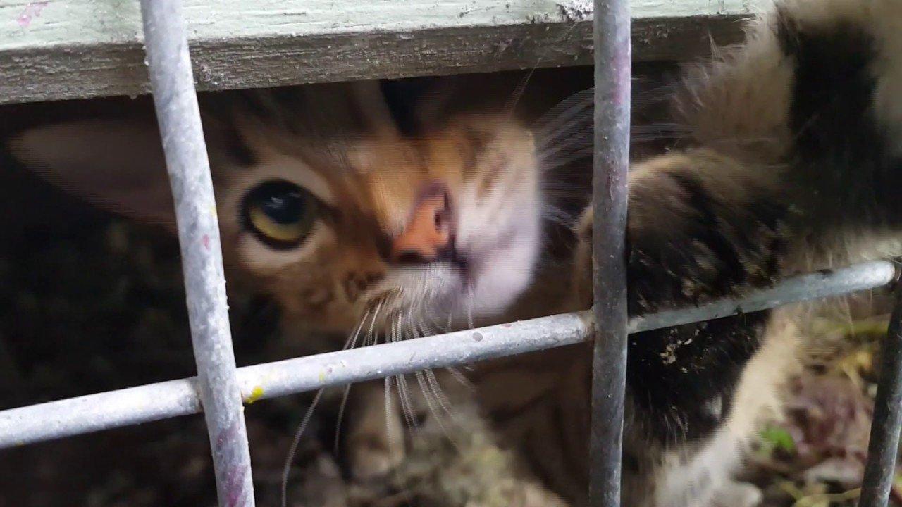 Cat in Chauka